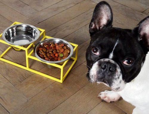 Loft Bowl fra Hello Pets Scandinavia